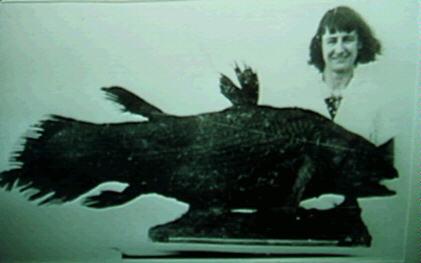 Photographies du premier cœlacanthe avec Miss Marjorie Courtenay-Latimer (à gauche) et du second cœlacanthe avec JLB Smith (à droite)