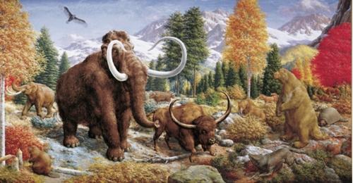 Il y a 10 000 ans : fortune des coyotes et déroute des tigres à dents de sabre :  : Le Dinoblog