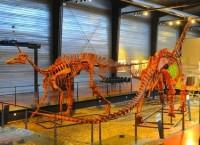 La halle aux dinosaures du monde