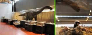 Eva l'Ampelosaurus